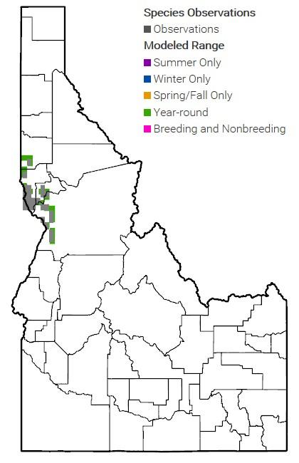 Spalding Catchfly Map