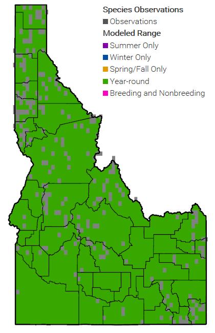 Western Bumble Bee Idaho Range Map