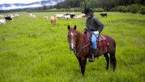 man on horse overlooks herd of cattle